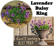 Lavender Star Daisy Ring