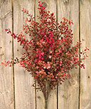 Red Peppergrass Bush, 21""
