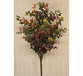 Eucalyptus Berry Bush, 19""