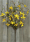 Star Forsythia Spray, 18""