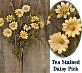 Tea Stained Daisy Pick