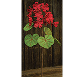 Red Burlap Geranium Bush