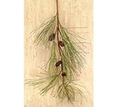 Long Needle Pine Spray - 28""