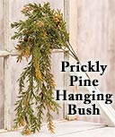 Prickly Pine Hanging Bush