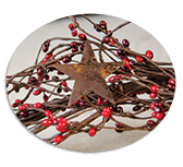 Red/Burg Star/Pip Garland, 40""