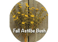 Mustard Fall Astilbe Bush