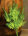 Wood Fern Bush, 14""