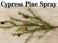 Cypress Pine Spray