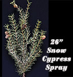 Snowy Cypress Spray