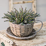 Gray Willow Cup & Saucer